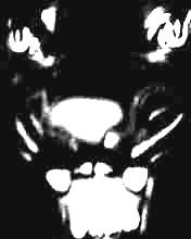 tigre noir.jpg