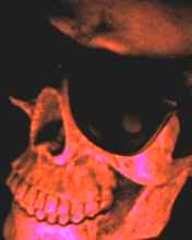 tête de mort, vanité
